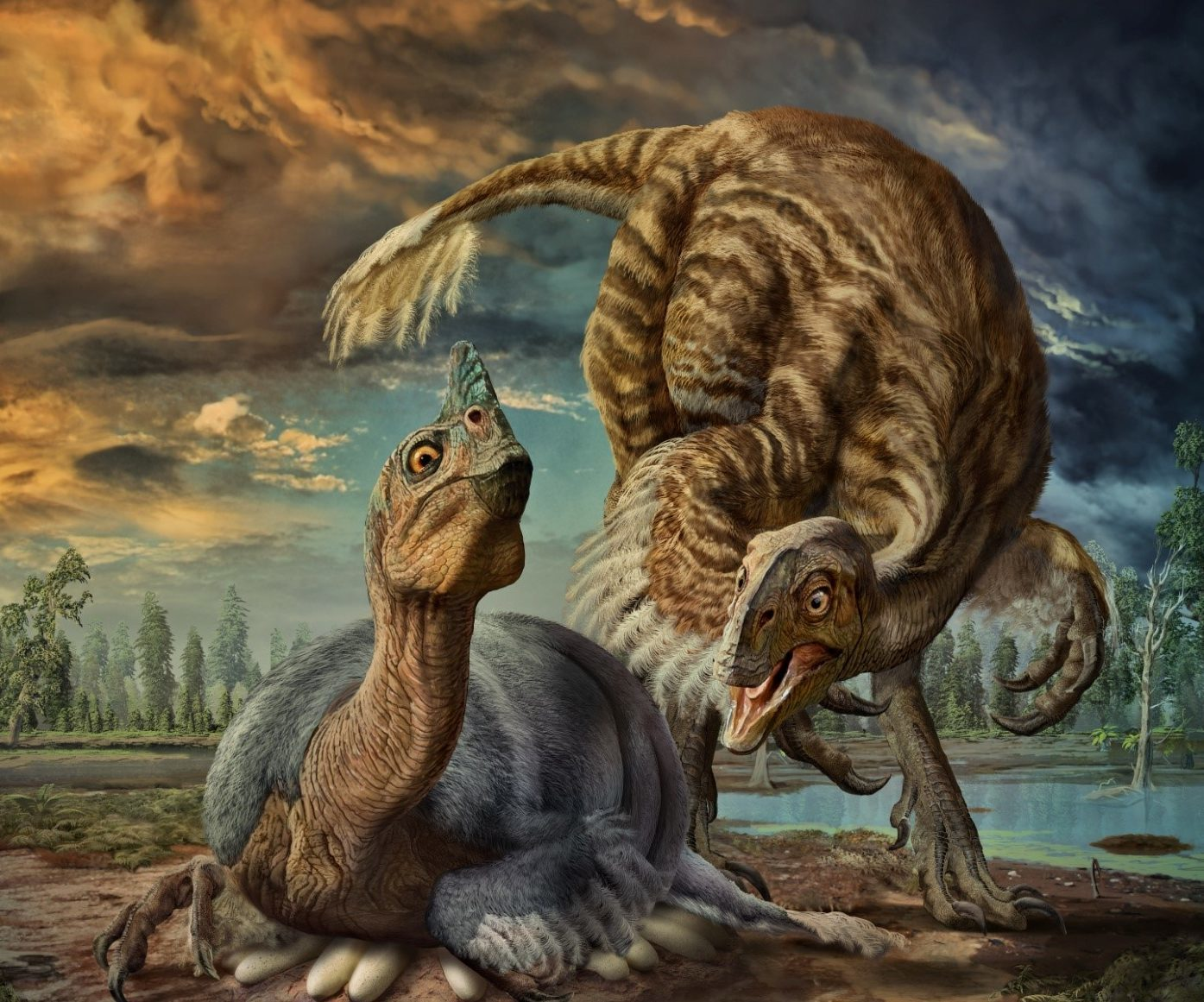 Illustration issued by the University of Calgary of an artist's impression of a nesting Beibeilong sinensis dinosaur incubating its eggs. (Zhao Chuang/PA Wire)