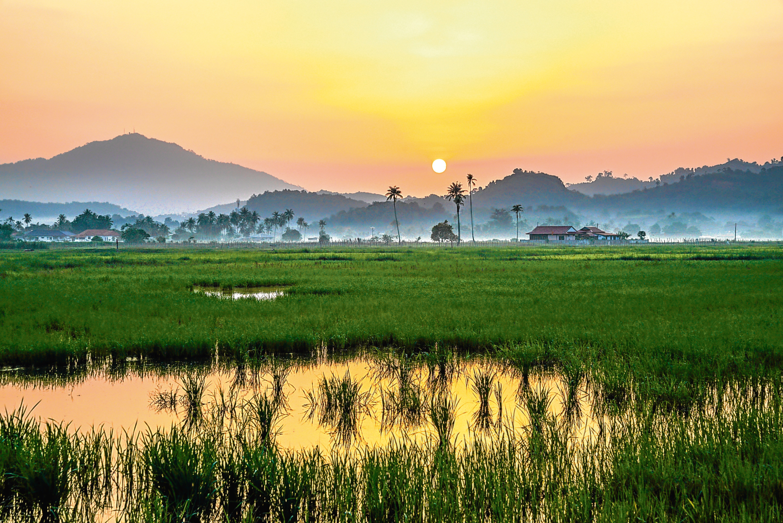 Scenery of the countryside in Malaysia (iStock)