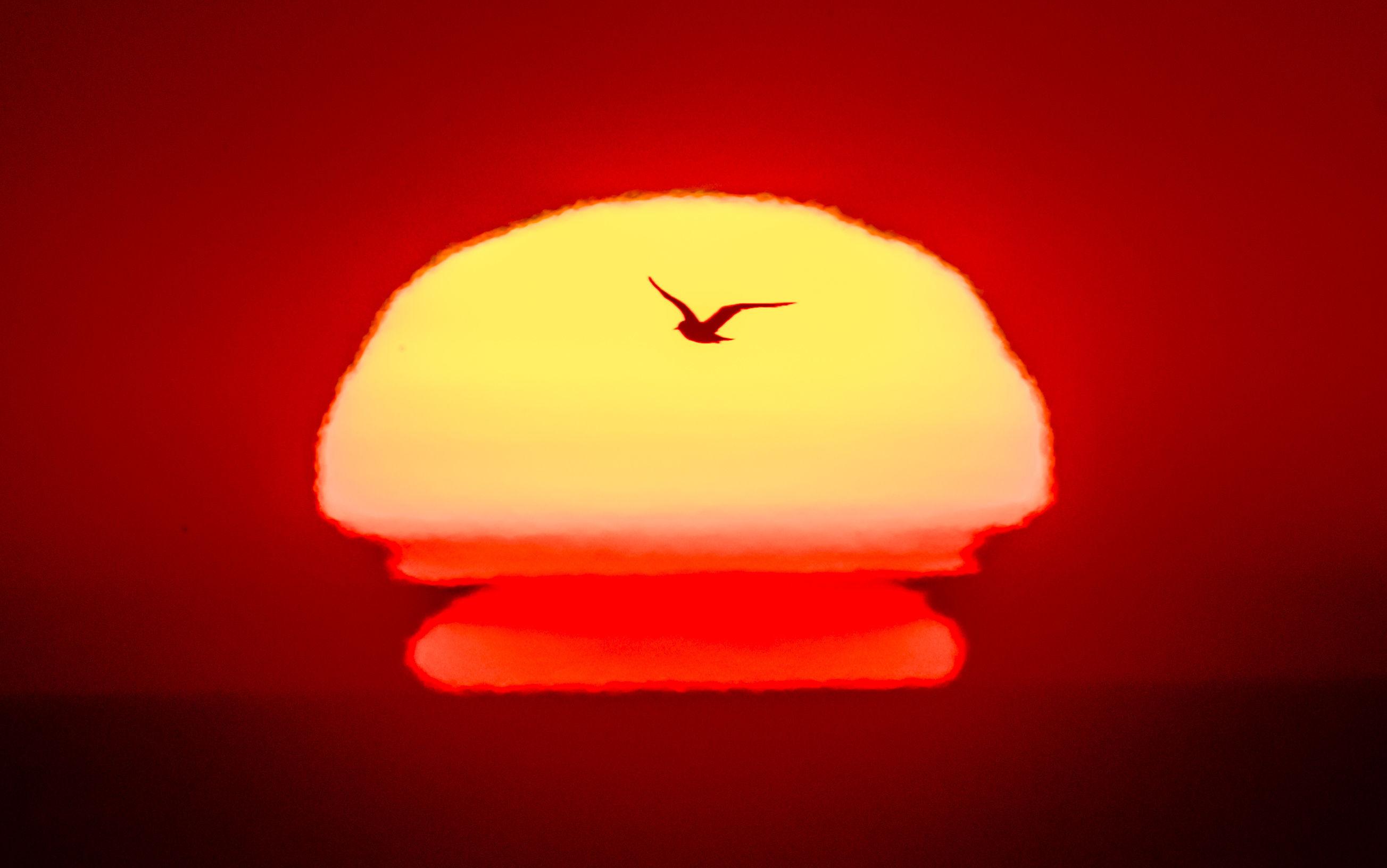 A sea bird flies past the rising sun (Danny Lawson/PA Wire)