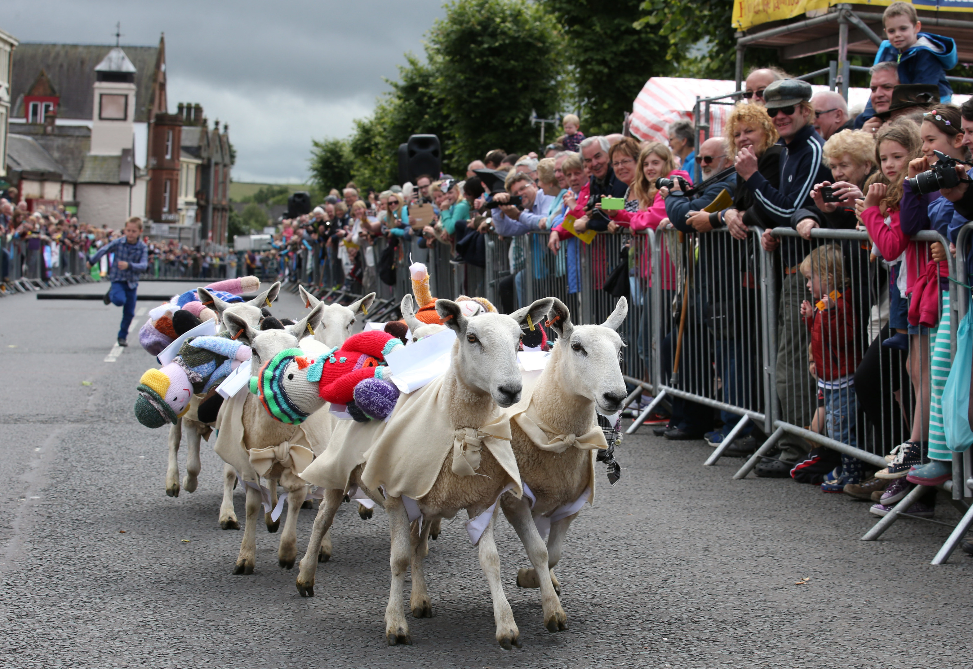 Sheep race down Moffat High Street in Dumfriesshire during the annual Moffat Sheep Races (Andrew Milligan / PA Wire)