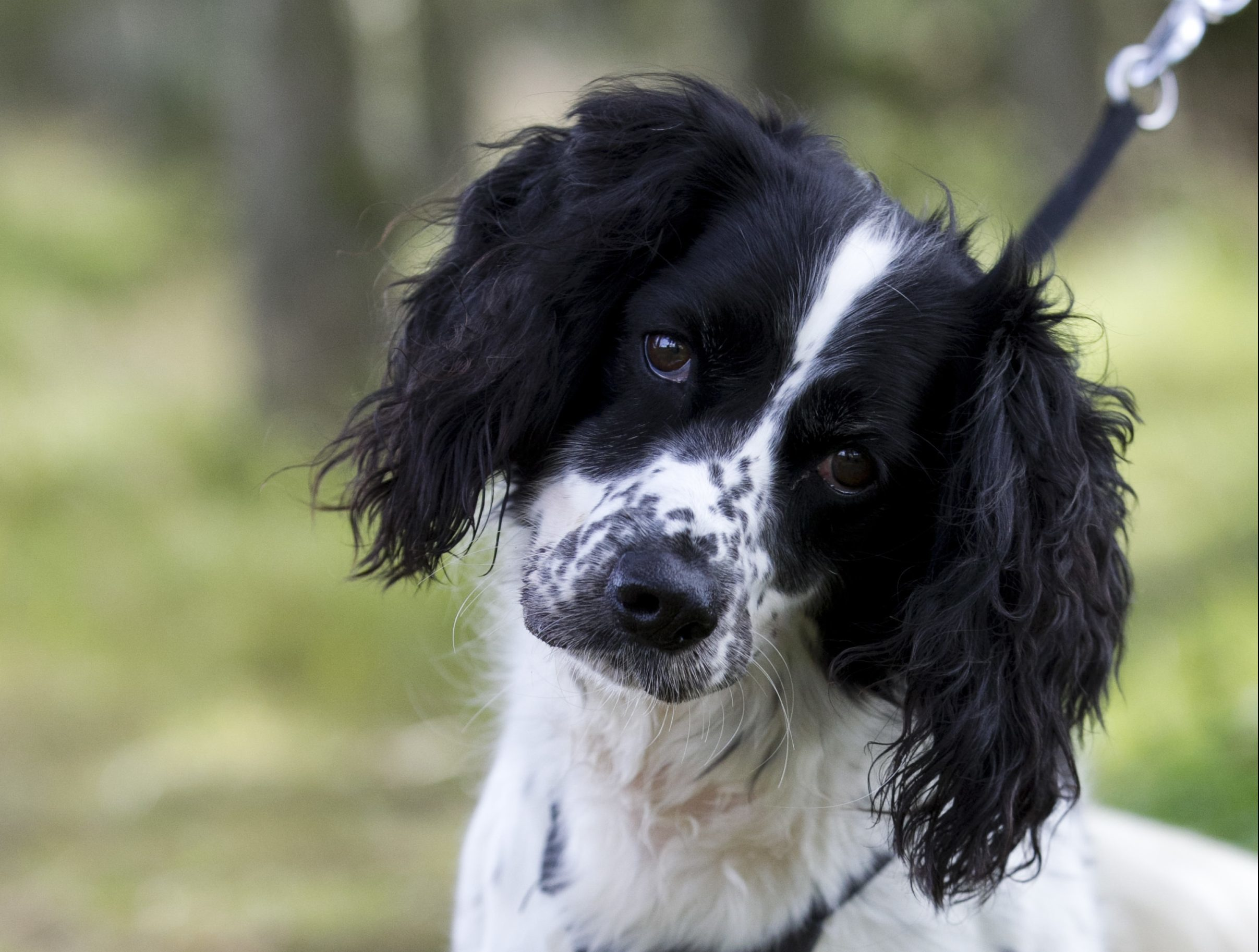 Flo the dog (Andrew Cawley, DC Thomson)
