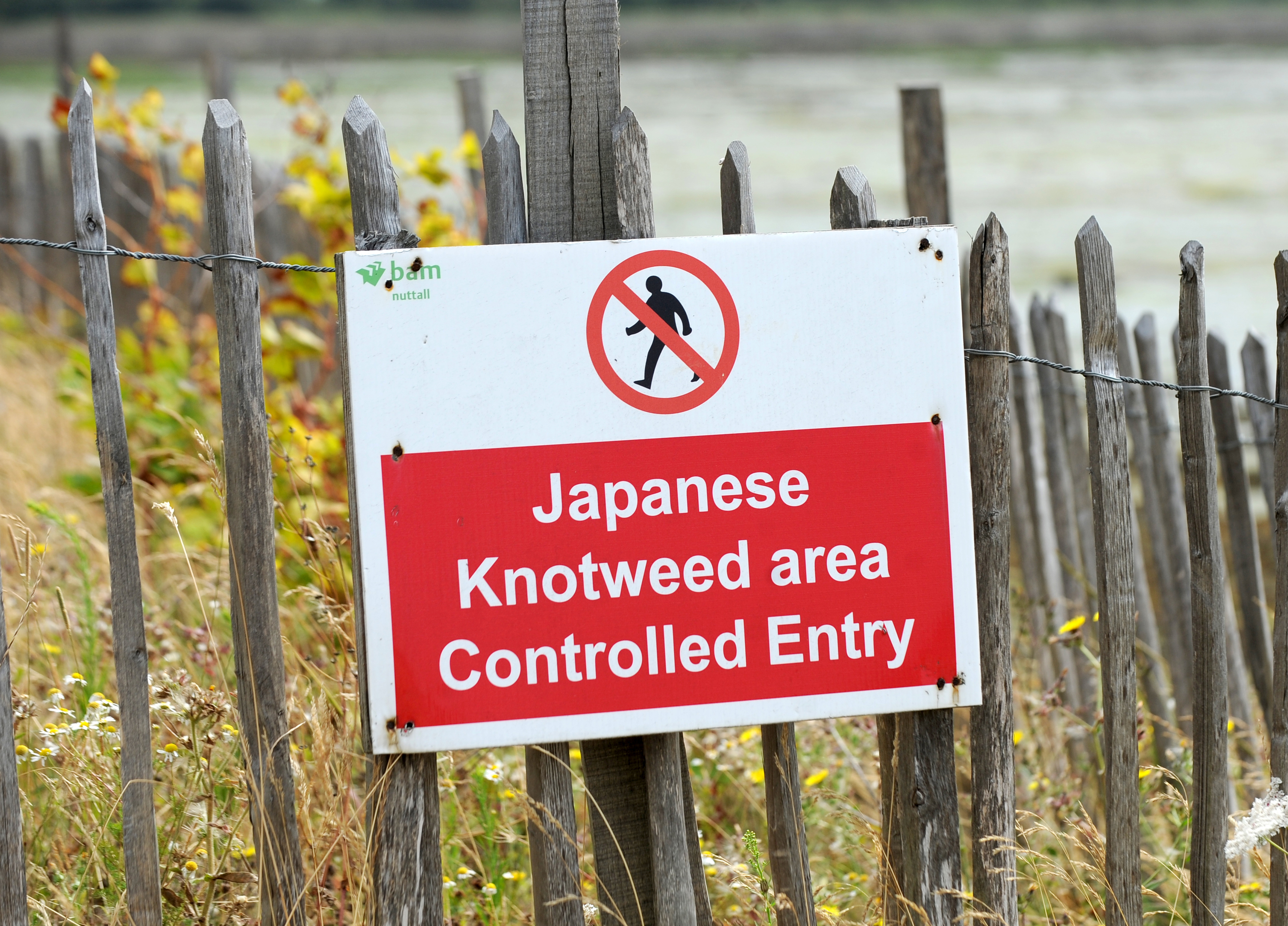 A sign prohibiting entry to a site due to the presence of Japanese Knotweed (PA)
