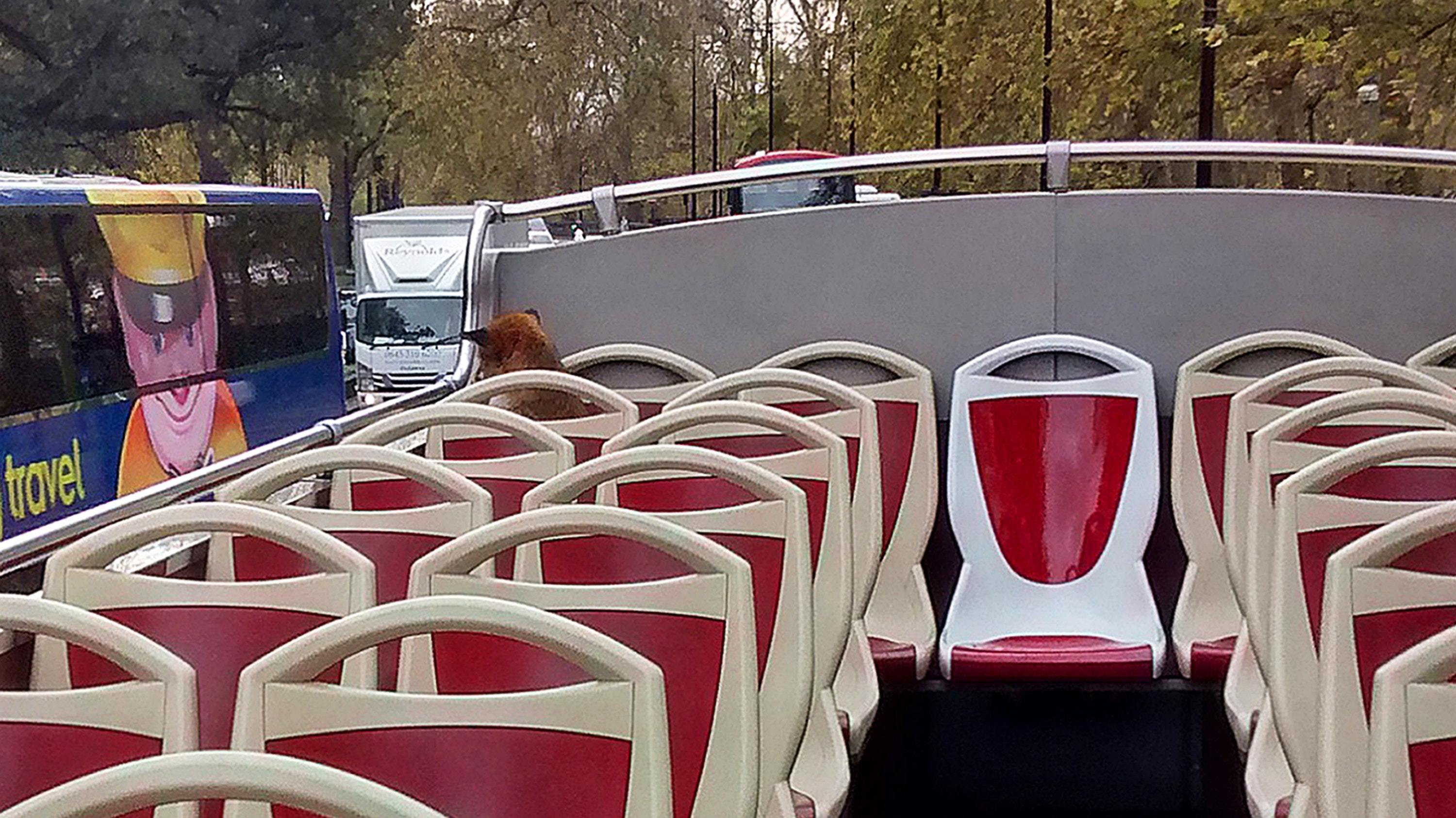 The RSPCA were called by Big Bus Tours to help catch the fox (RSPCA/PA)