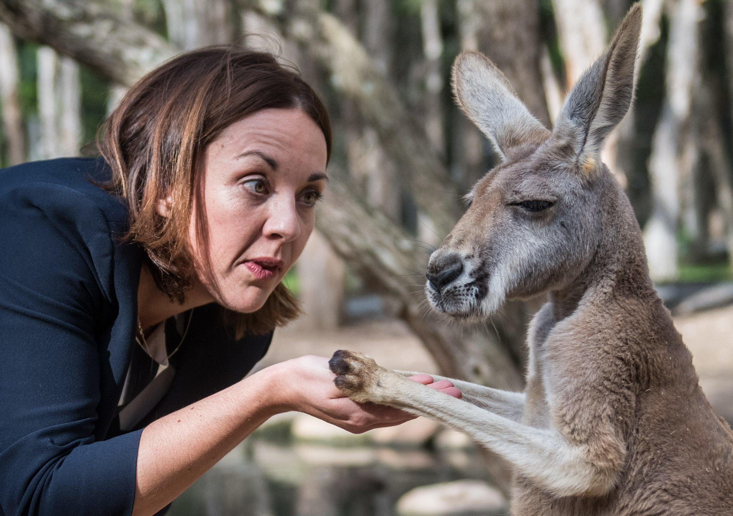 Kezia Dugdale feeding a Kangaroo (James Gourley/REX/Shutterstock)