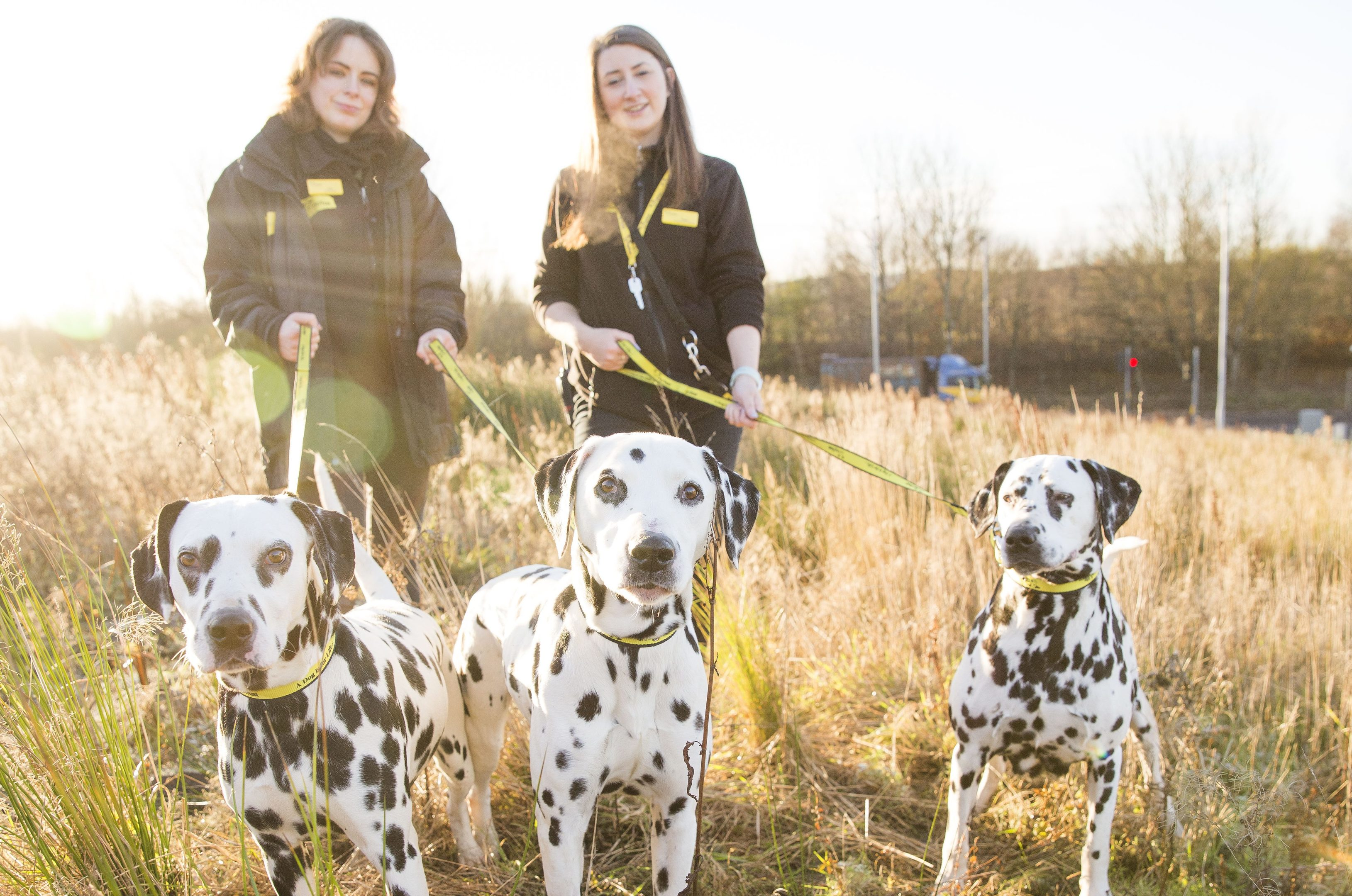 Dogs Trust Glasgow warning about dogs being abandoned before Christmas after 3 Dalmatians where left in a street in Ayrshire named now Oreo, Bell and Jingle with Helyn Nichol & Megan Cocks (Jamie Williamson)