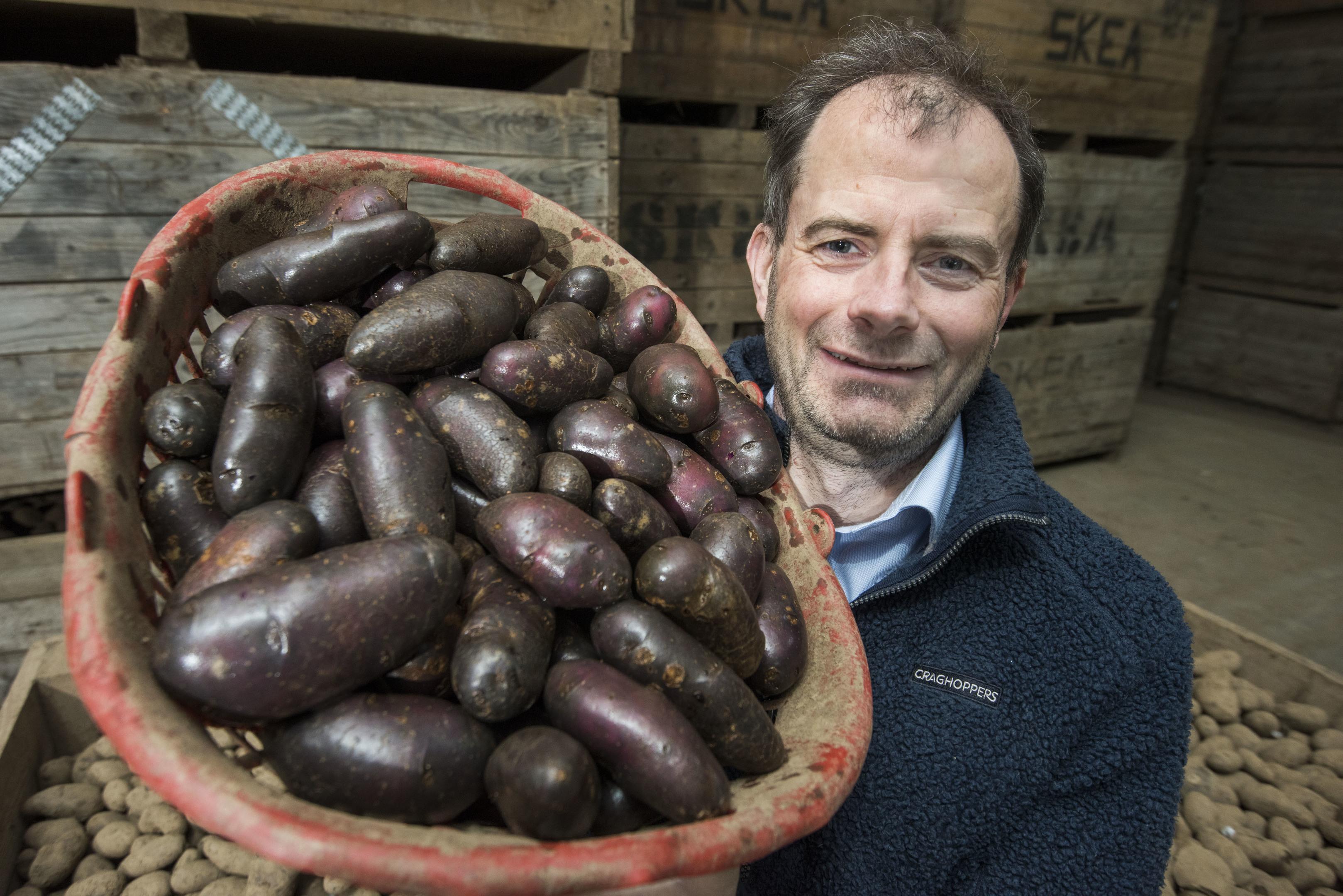 Andrew Skea with his Shetland Black Potatoes (Alan Richardson)
