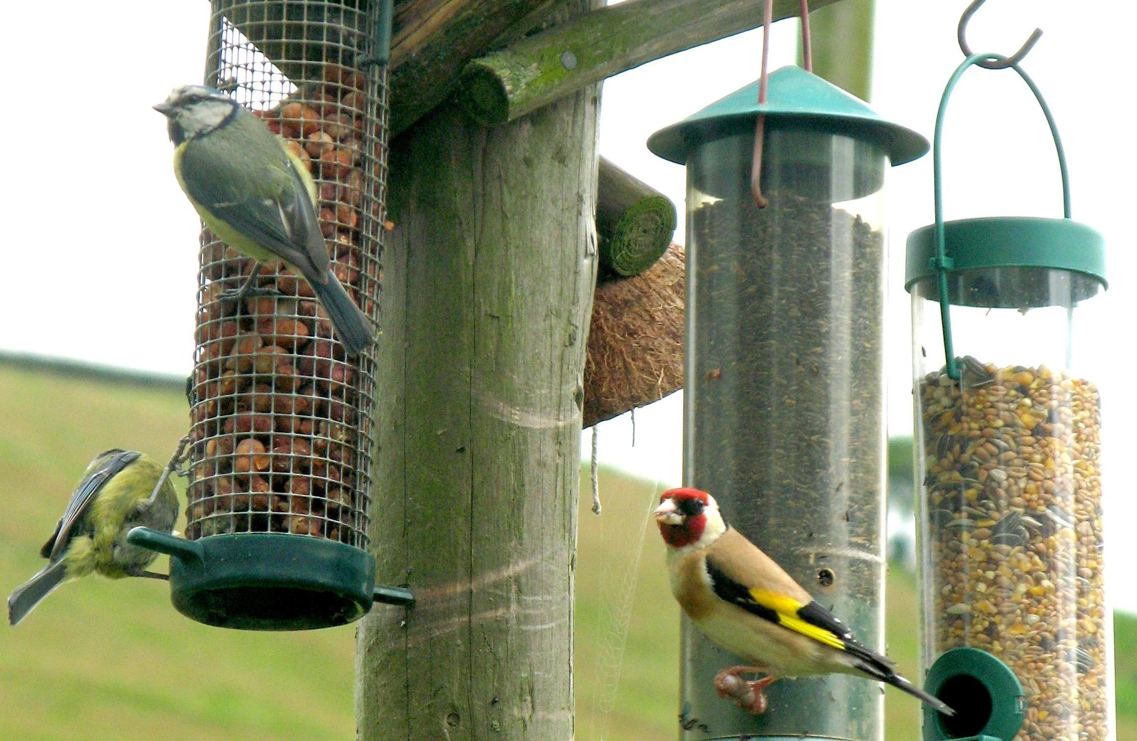 A Goldfinch and a pair of Blue Tits feeding from bird tables (Stephen Kelly/PA Wire)