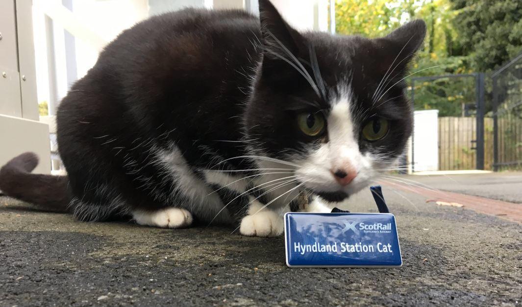 Hermes the Cat has been found (Twitter / @HyndlandStCat)