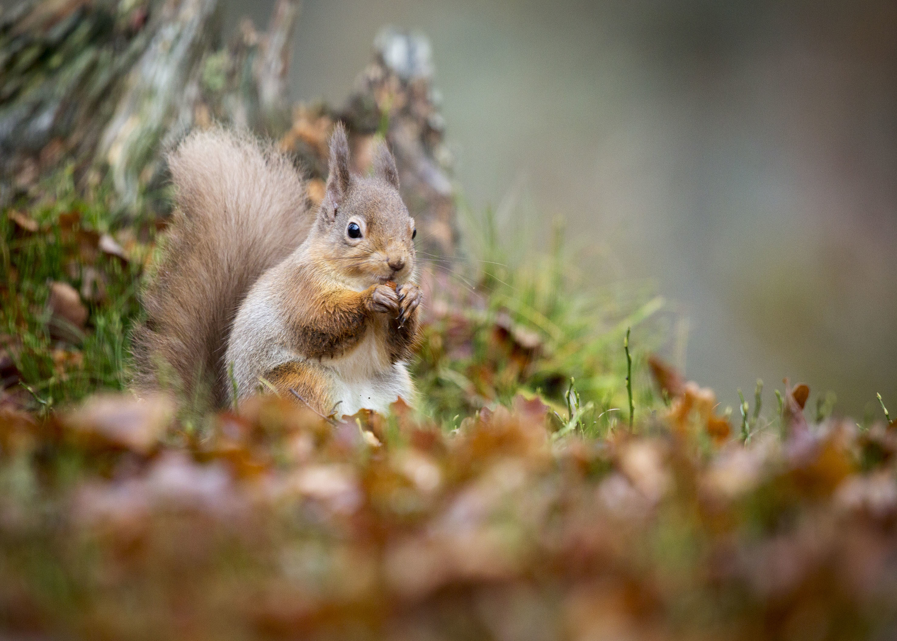 (Scottish Wildife Trust, Joanne Foo)