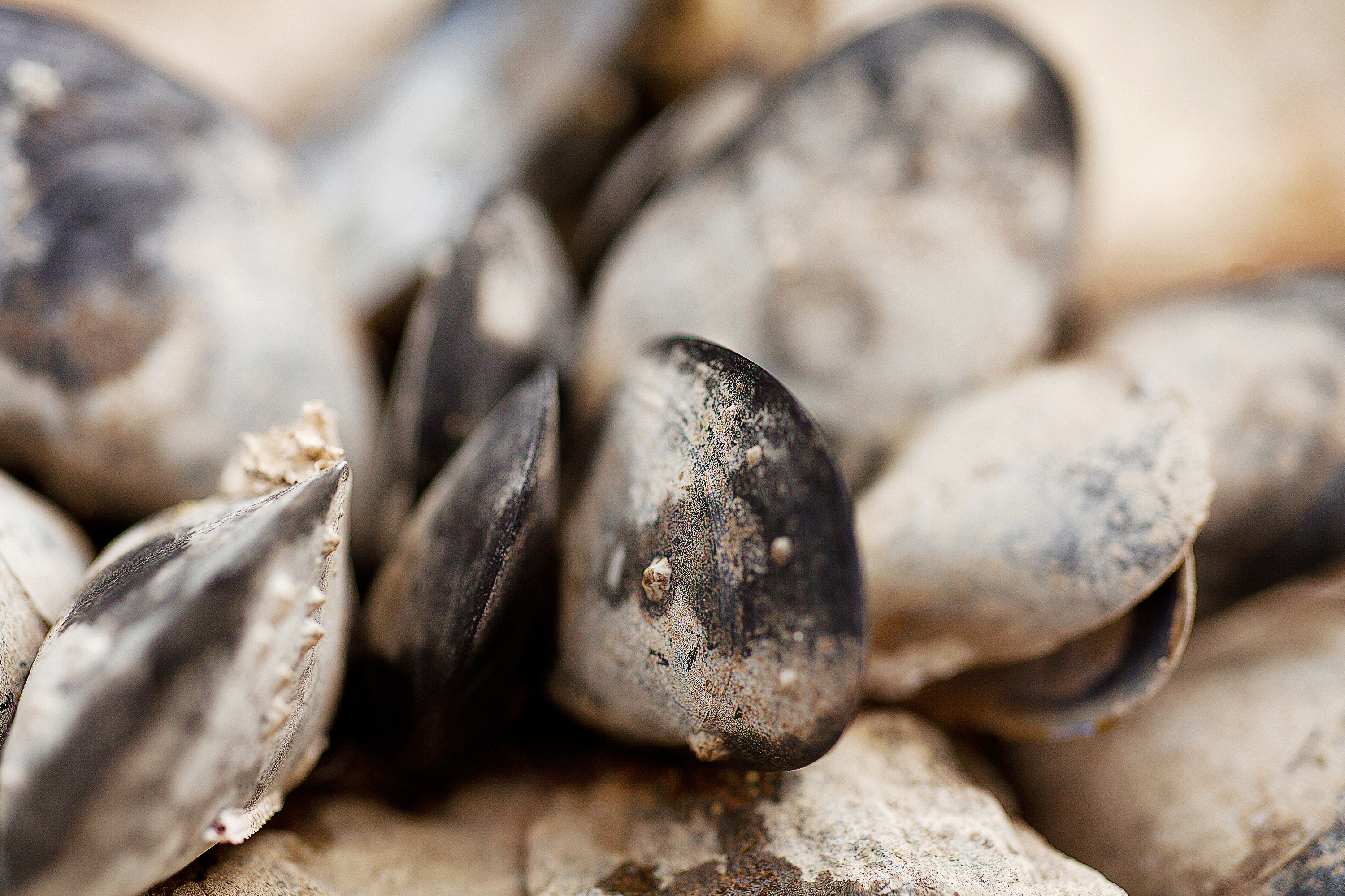 Traces of the virus were found in eight blue mussels (Getty Images/iStock)