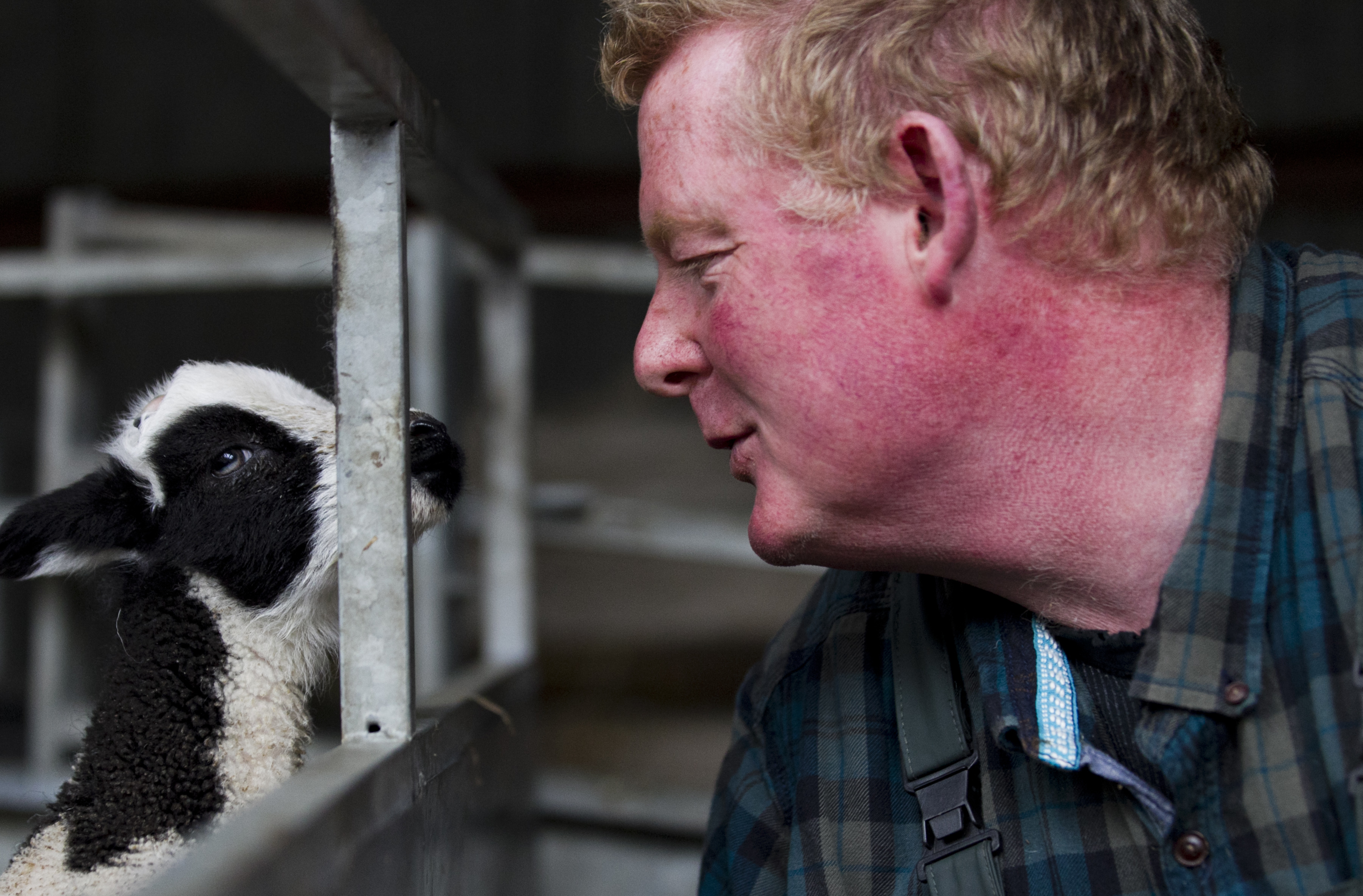 Farmer Kenny Dickson looks after the distinctive Jacob lambs (Andrew Cawley)