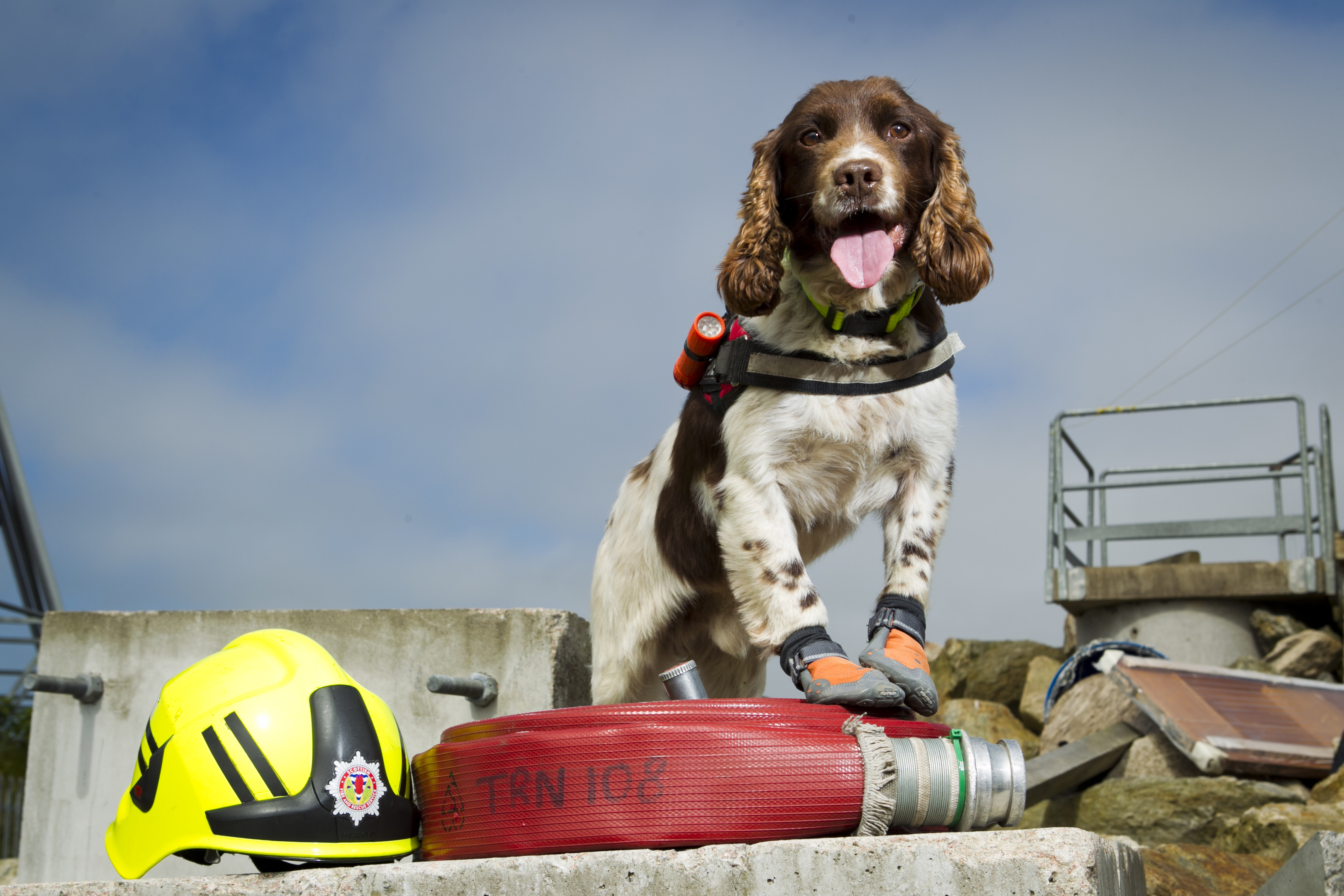 Diesel, the Fire Service's search and rescue dog (Andrew Cawley / DC Thomson)