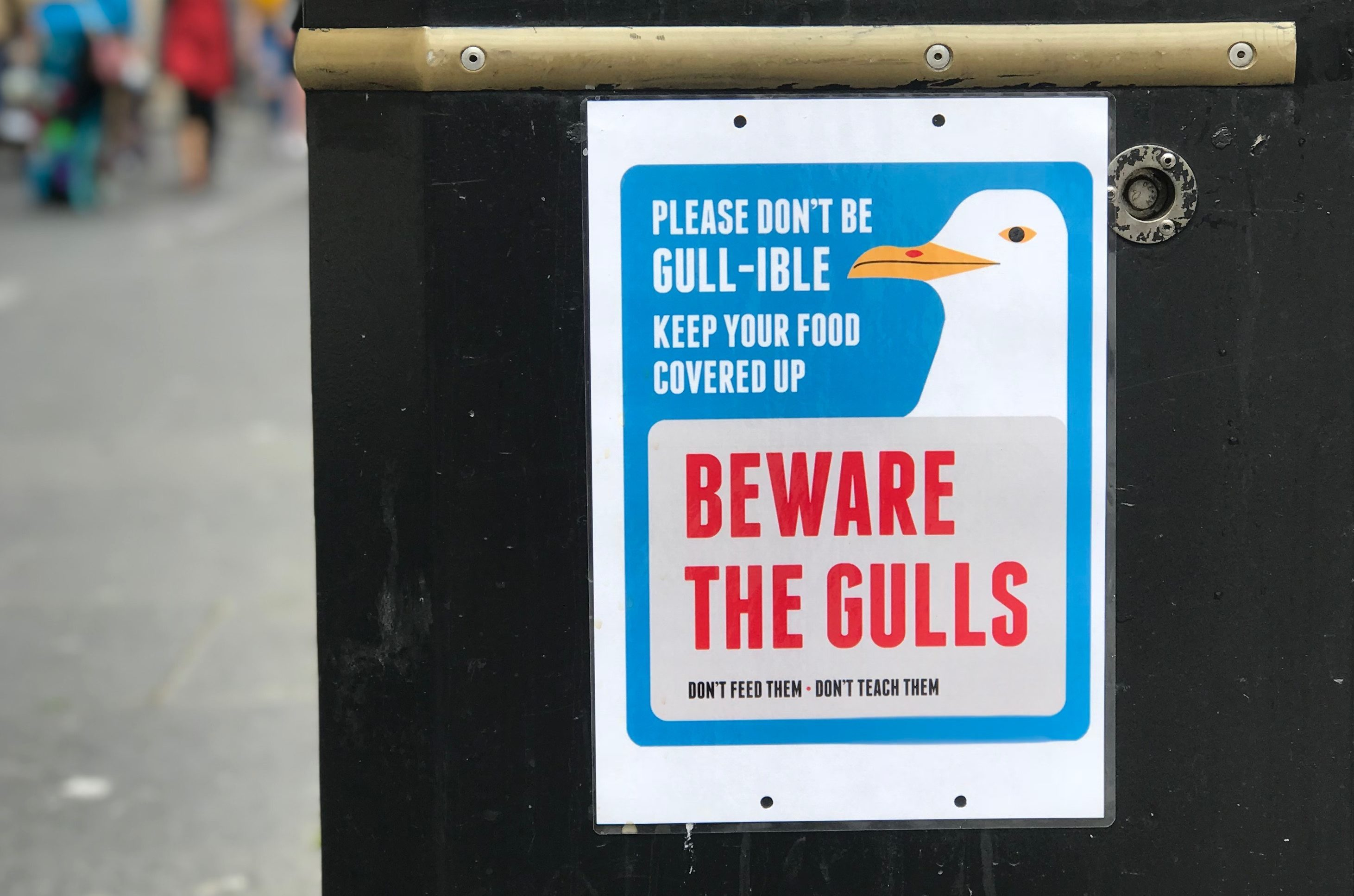 Seagulls are proving a nuisance in Dundee (Jon Brady / DC Thomson)