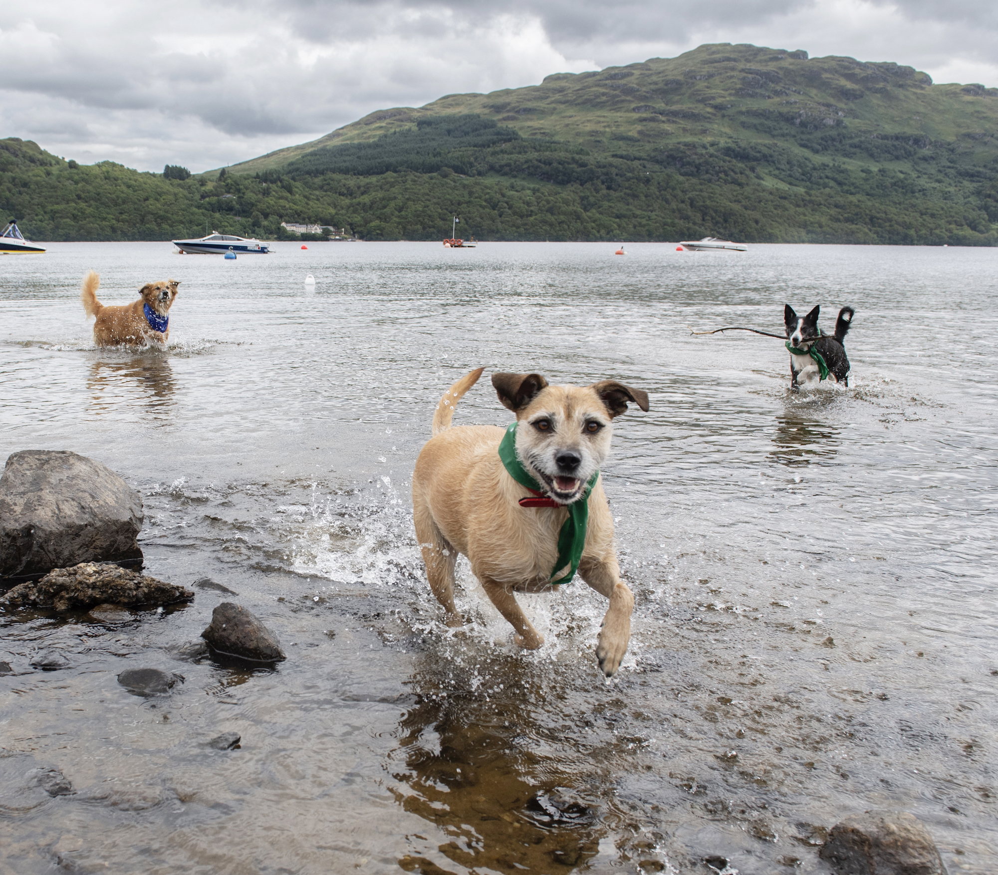 A group of SSPCA rescue dogs enjoyed a day at the beach thanks to Argyll Holidays (Paws Pet Photography)
