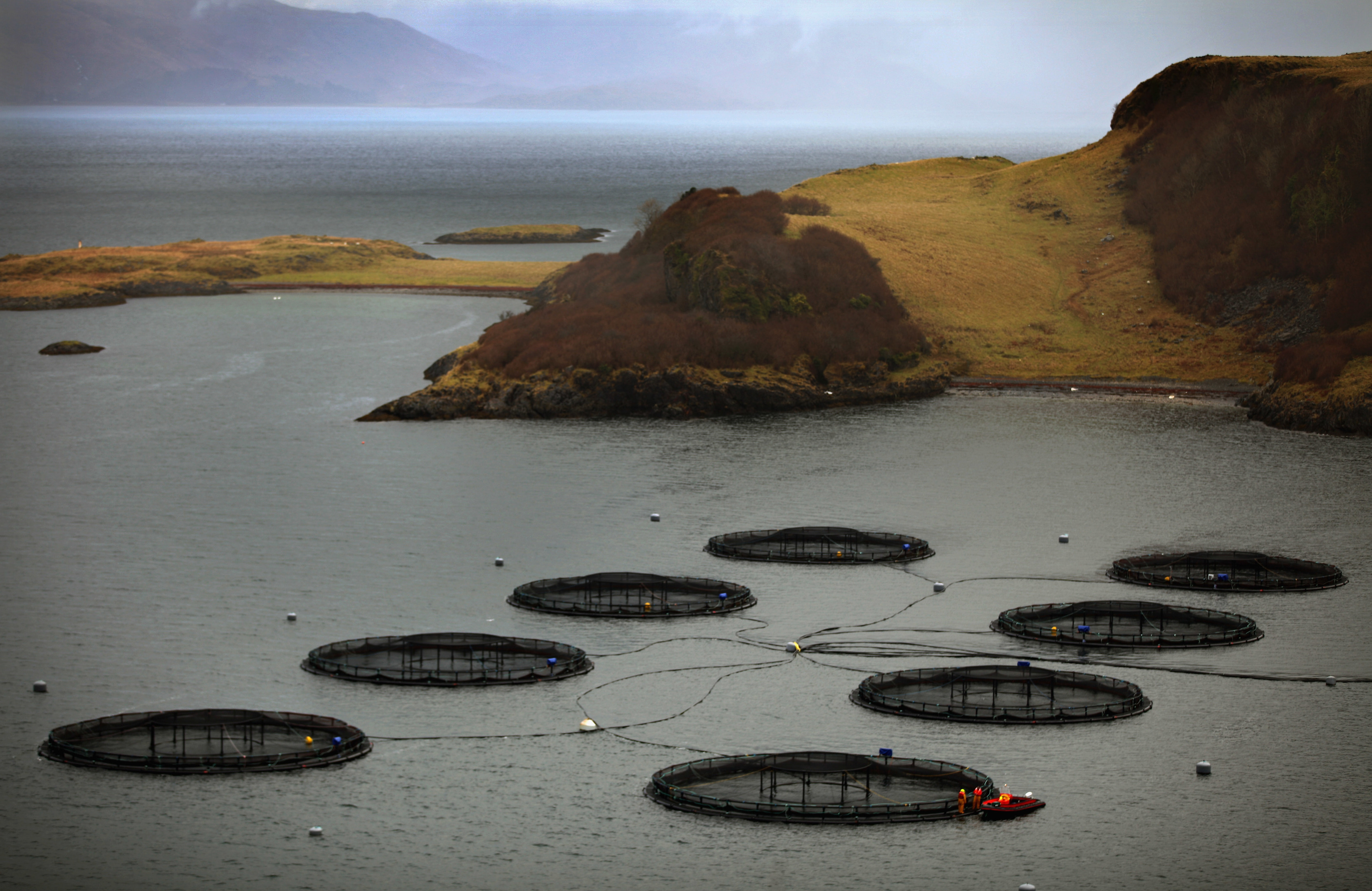 Scotland's fish farming industry has also been boosted by an agreement between the Scottish Government and China to export salmon to Asia. (Jeff J Mitchell/Getty Images)