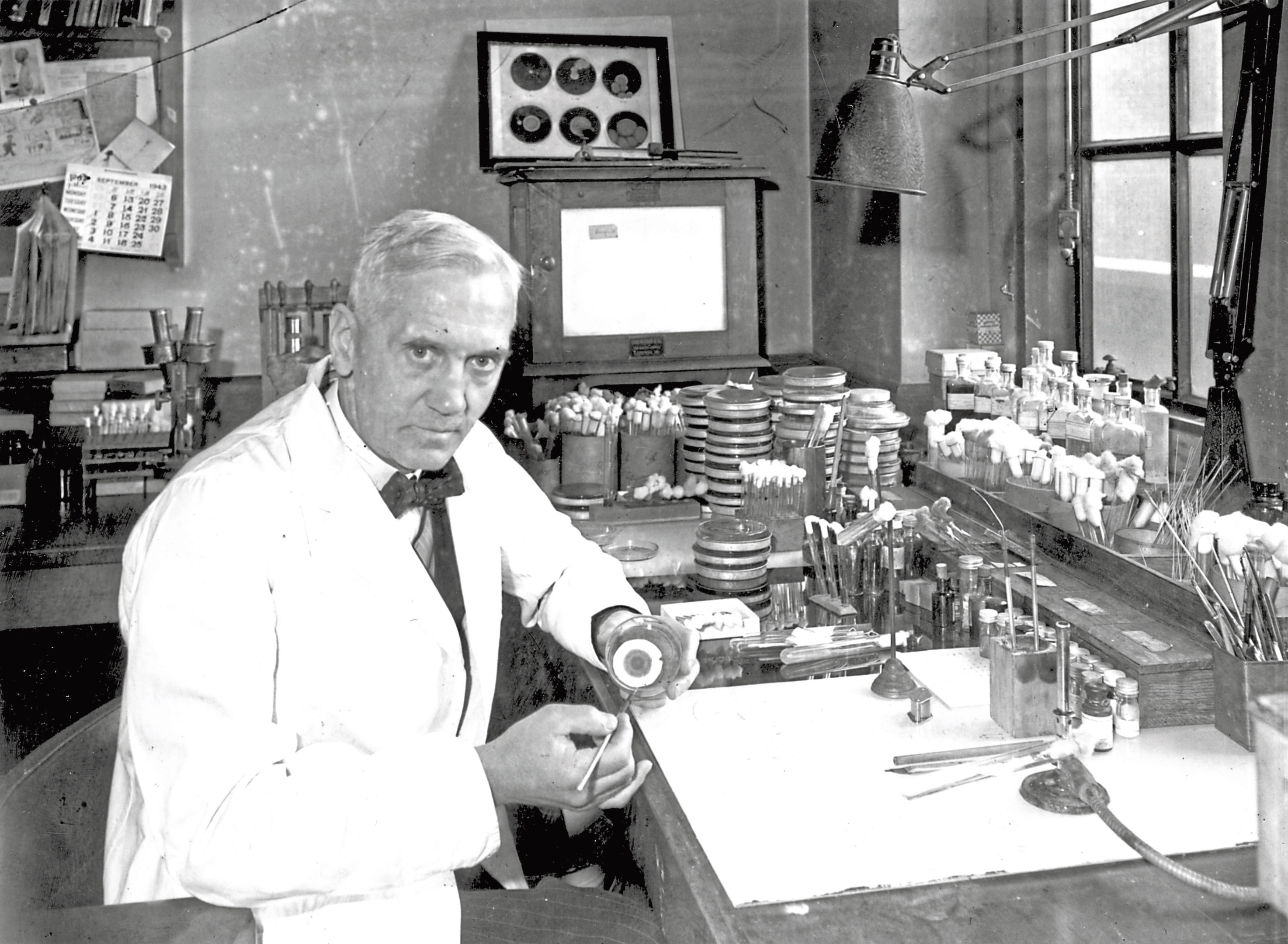 Sir Alexander Fleming in his lab at St Mary's Hospital in Paddington, London, 1943 (Davies/Keystone/Hulton Archive/Getty Images)