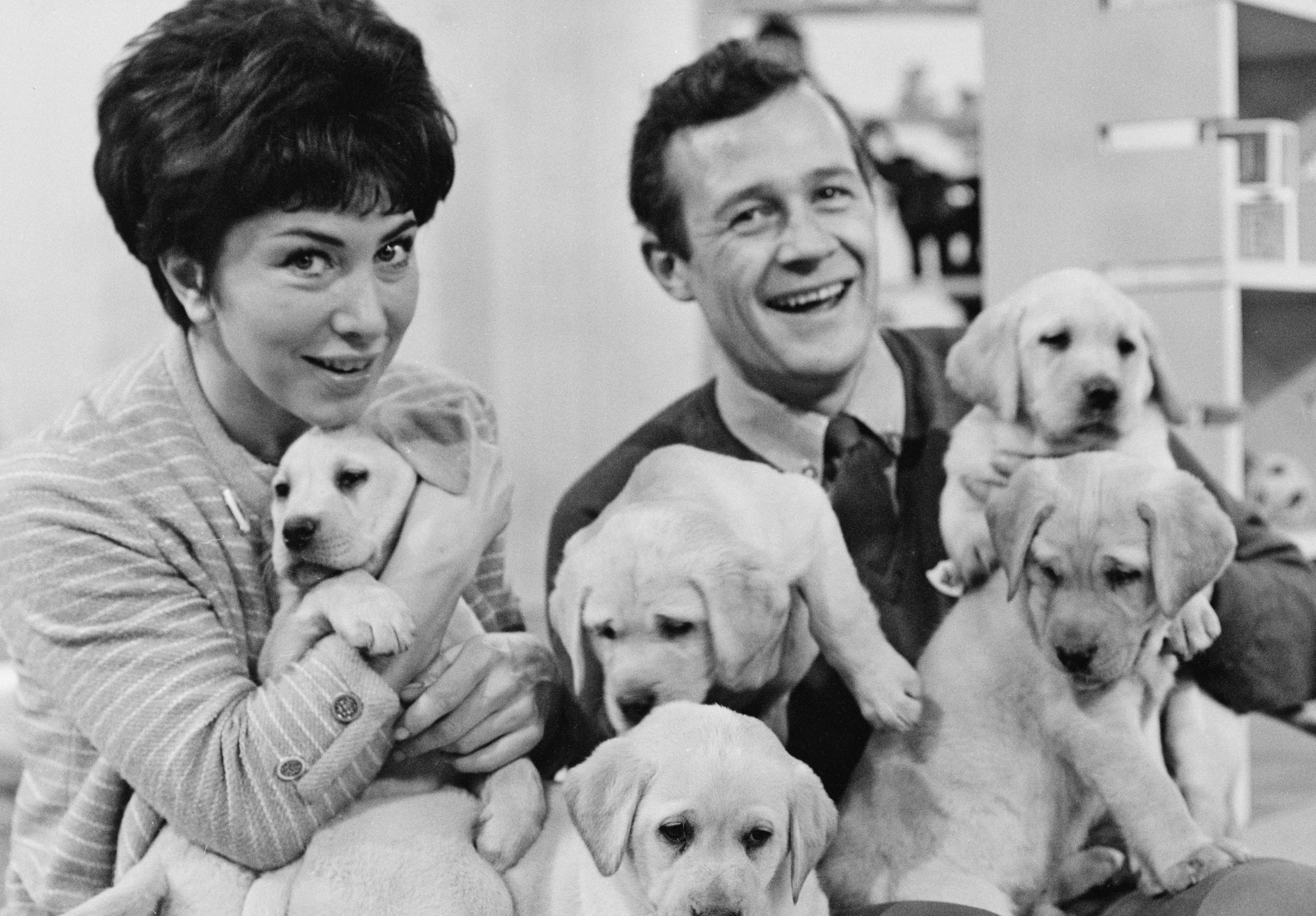 Valerie Singleton and Christopher Trace, presenters of the children's television show 'Blue Peter', with five of the labrador puppies from which two guide dogs for the blind will be selected, 17th March 1965. (Photo by George W. Hales/Fox Photos/Hulton Archive/Getty Images)