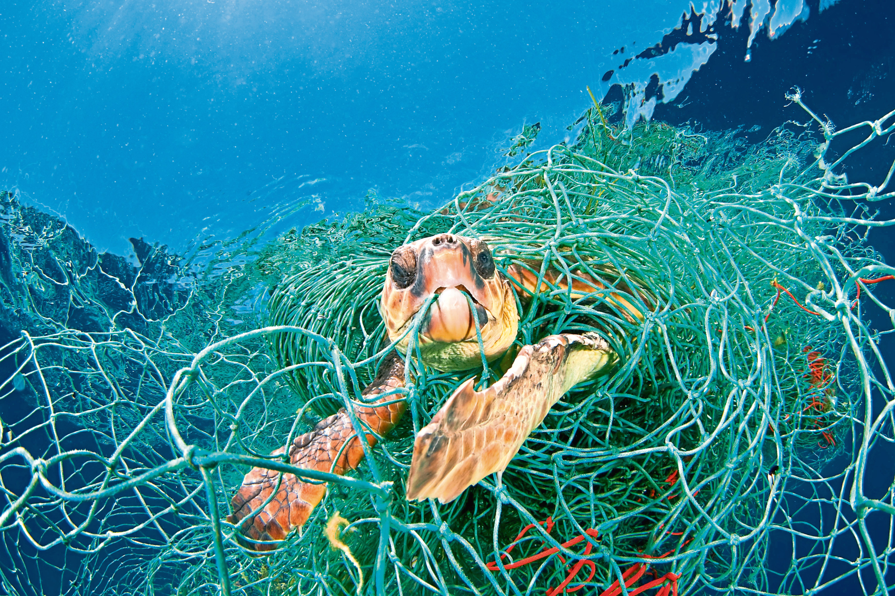 "Loggerhead turtle trapped in a drifting abandoned net in the Mediterranean Sea. A global deal similar to the Paris Agreement on climate change is needed to protect wildlife and people from ""our wanton destruction of nature"", WWF urges. (PA)"