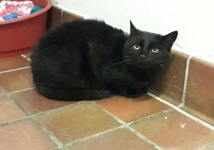 Could you give Cher a new home?