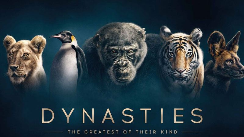 Sir David Attenborough broke his own rules while filming new series, Dynasties. (BBC)