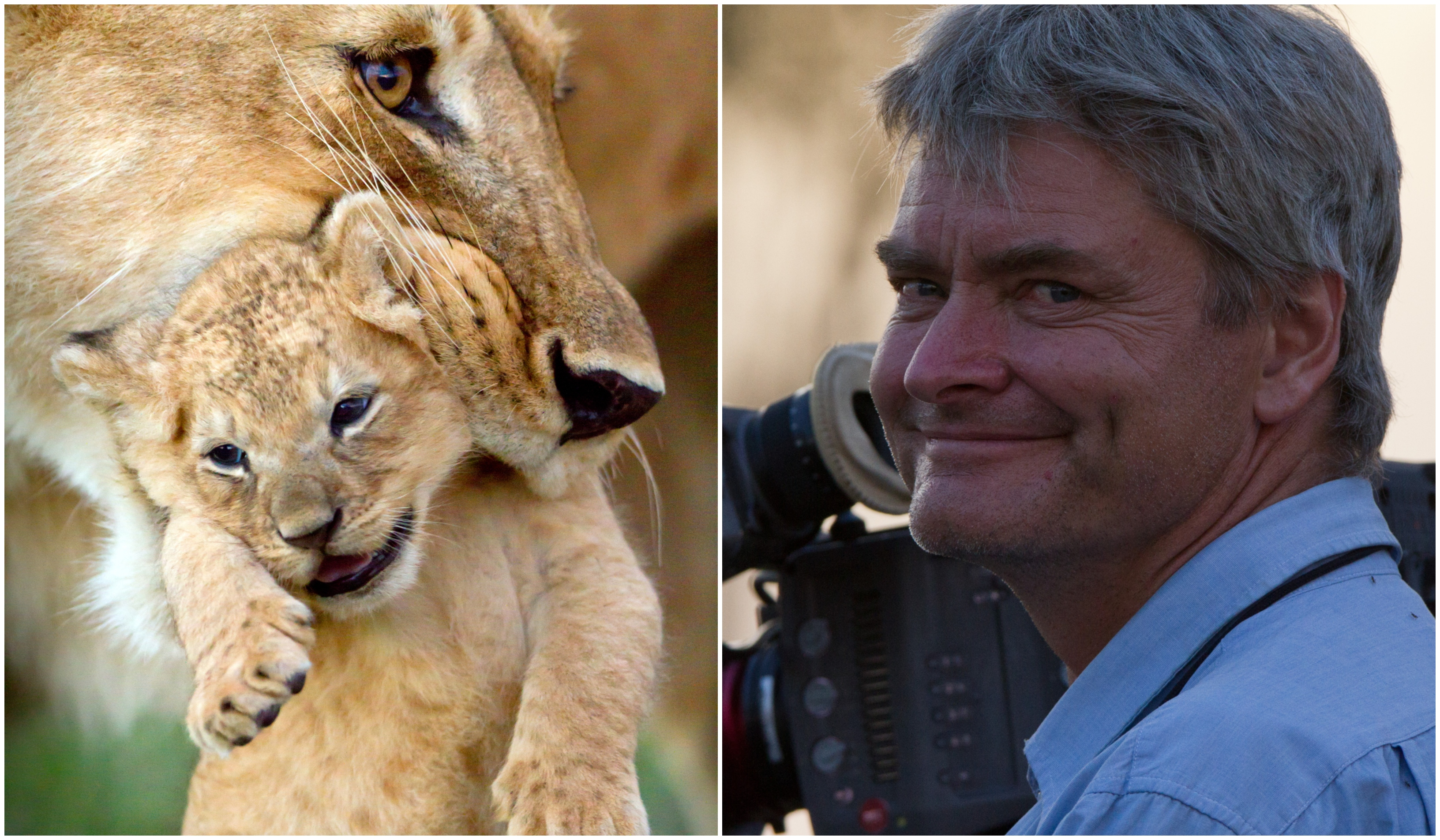The matriarch of the Marsh Pride carries one of her cubs to meet the rest of its family for the first time, left, and cameraman John (BBC NHU / Simon Blakeney)