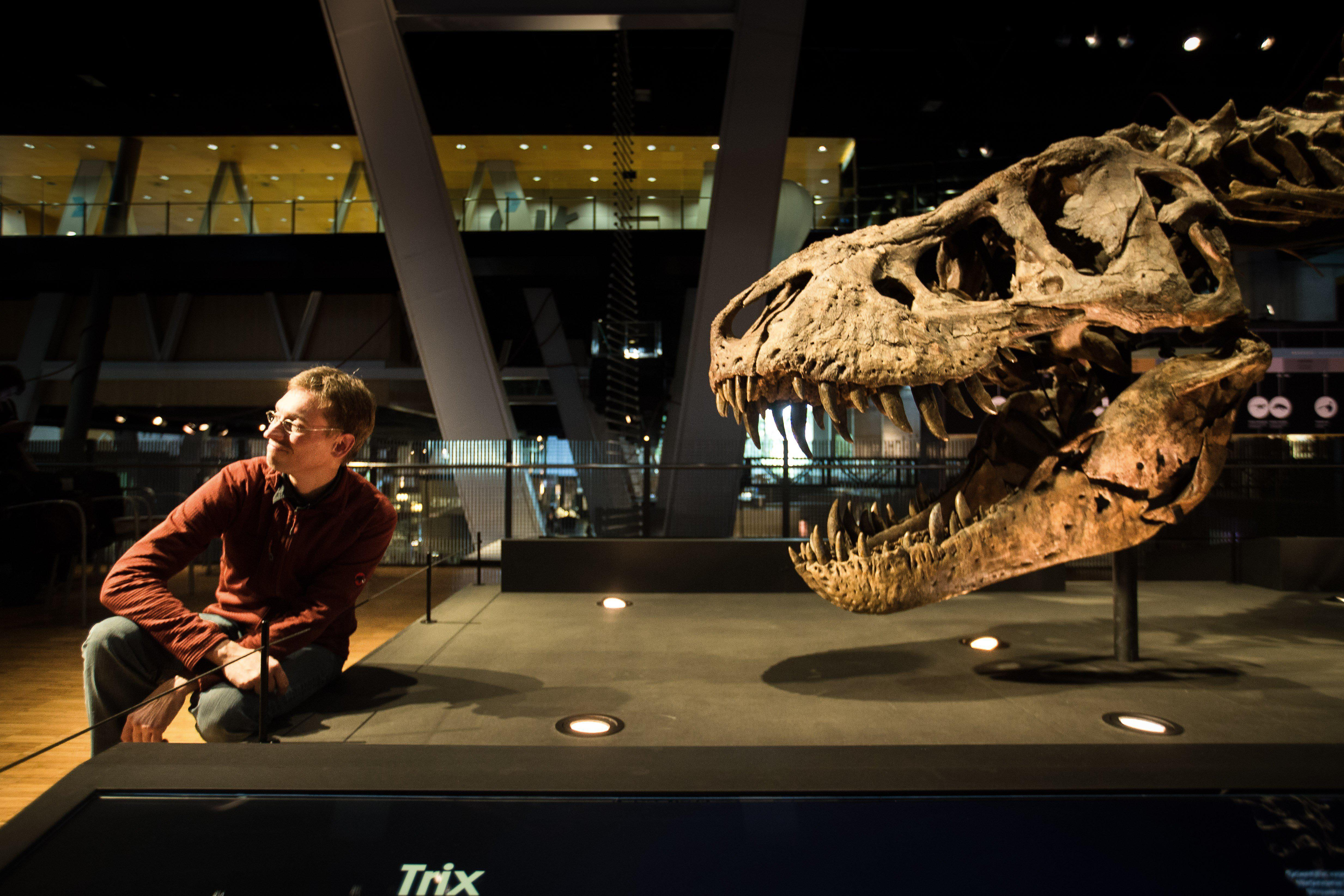 Dutch paleontologist Anne Schulp, poses next to Trix, the most complete skeleton of Tyrannosaurus rex in the World, which was discovered in Montana (USA) in 2013, as he addresses the media during the presentation of the exhibtion 'T. Rex', at Cosmocaixa in Barcelona, northeastern Spain.