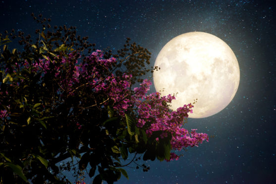 The pink moon should be brightest today but won't be visible until dusk.
