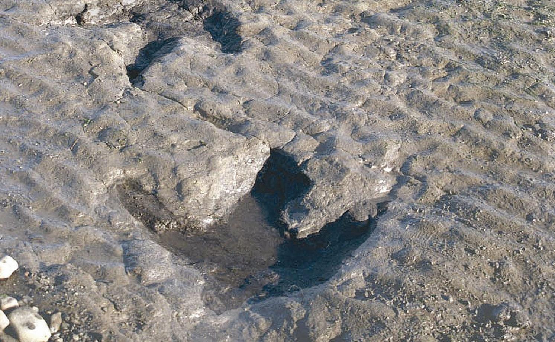 Dinosaur footprints at An Corran