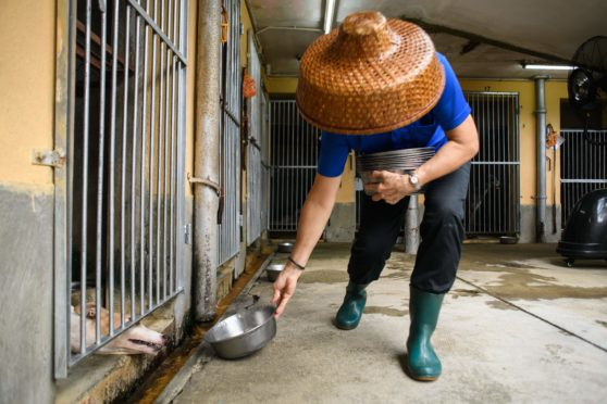 a dog is fed at the Canidrome Club in Macua, Asia's only legal dog-racing track, in 2018. The track has since been closed down
