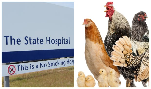 Chickens are among the animals being used at The State Hospital