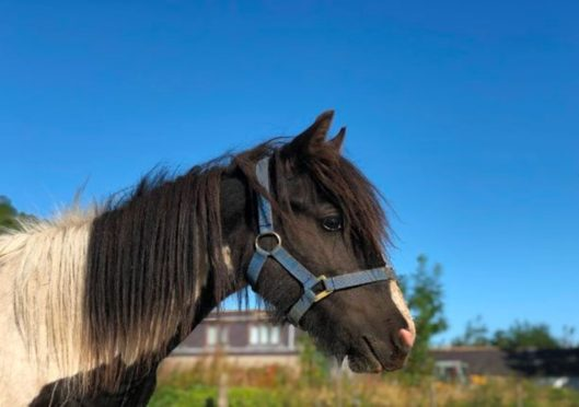 Merida the pony needs some TLC.