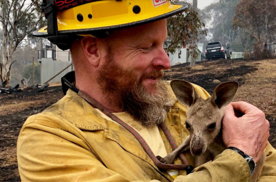 Firefighter Dave Soldavini cradles a baby kangaroo rescued from blazes in southeast Australia