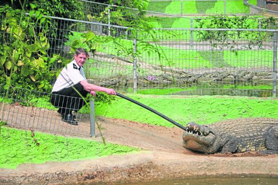 SSPCA chief supt Mike Flynn with Big Daddy, Europe's biggest crocodile, at Torremolinos animal park