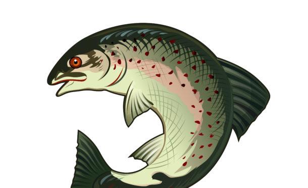 Salmon stocks in Scotland are at crisis levels