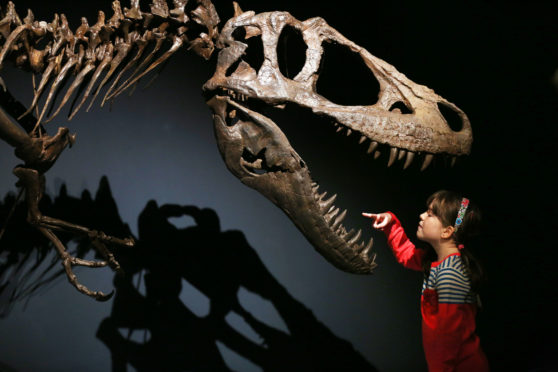 Rosa Connolly gets a sneak preview of the Tyrannosaurs exhibition at the National Museum of Scotland, Edinburgh last week