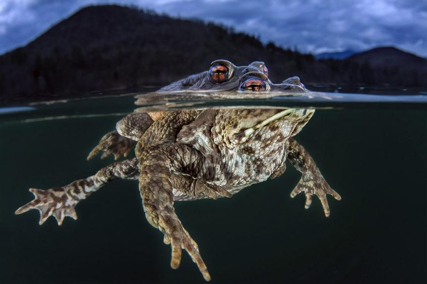 Claudio Zori - Toads