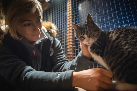 Volunteer Cat Campbell at the animal sanctuary set up after Cats Protection branches were closed in Sandwick, Lewis