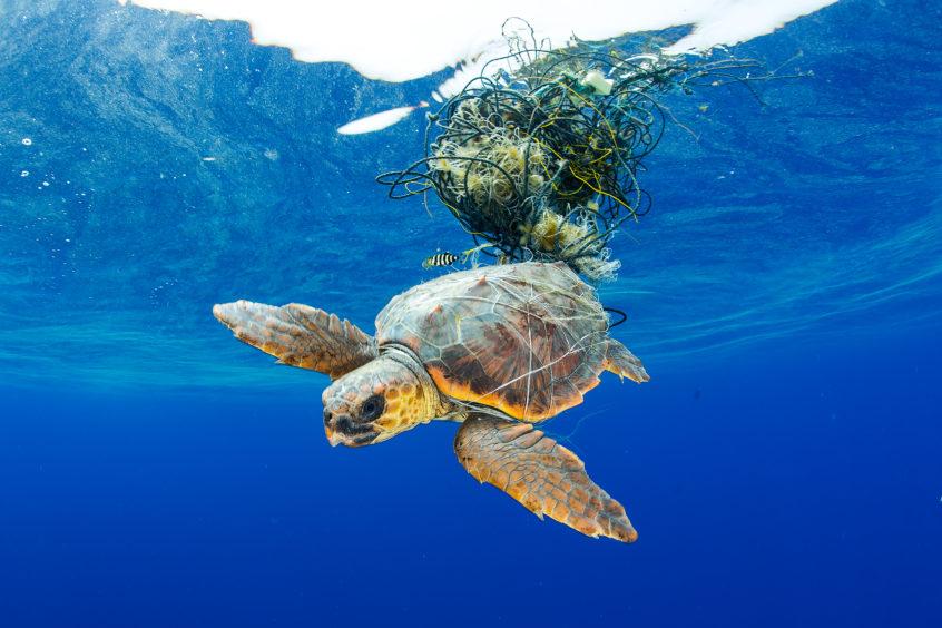 Francis Perez - Sea Turtle Entangled