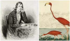 An old engraved portrait of ornithologist Alexander Wilson published in Magasin Pittoresque, Paris, in 1850