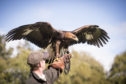Make some feathered friends at The Falconry School, in the grounds of the spectacular hotel