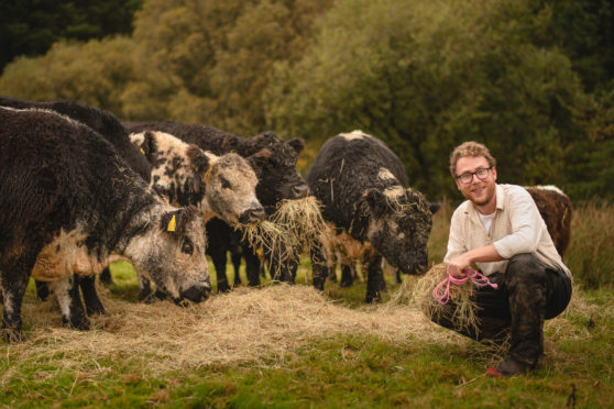 Author and farmer Patrick Laurie with his cantankerous but hardy herd of rare Riggit cows on his Galloway farm