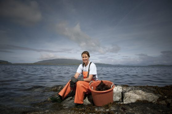 Fiona Houston forages for kelp and seaweed – which is highly nutritious, and free – at low tide