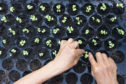 Now is the time to prick out any seedlings