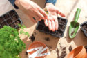 With so much time on our hands, many of us are finding the joys of growing from seed –  but you can avoid one of the most common mistakes if you use a good quality compost