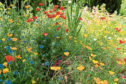The most vital ingredient in any garden is imagination, says Agnes Stevenson, and if you want brightness and beauty, think annuals such as poppies