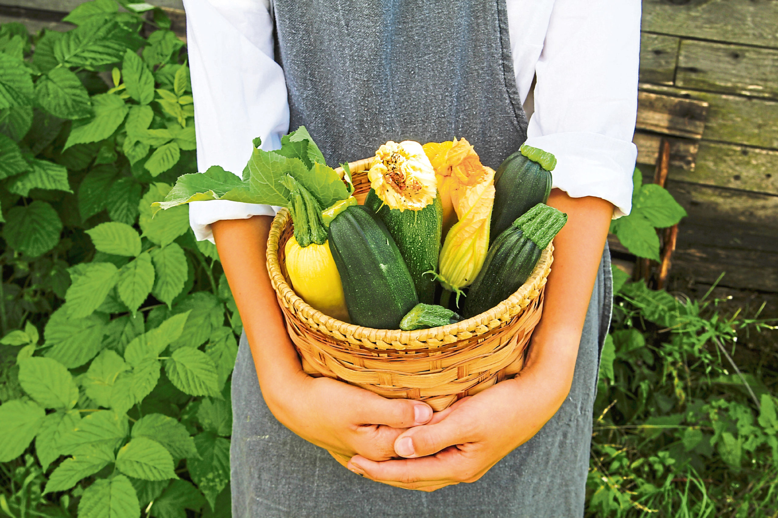 Take care of growing plants now for a great courgette  harvest later