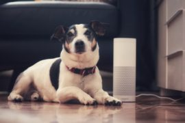 Scots vet firm creates system where owners can ask Alexa or Google Home for pet emergency advice