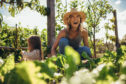 It's the good life for many of us as we explore the chance to grow our own fruit and veg but demand is high and waiting lists for allotments in the city are already years long
