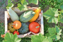 Enjoy a harvest of pumpkins and squashes