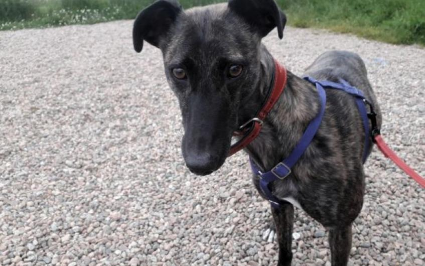 Teile is looking for a home